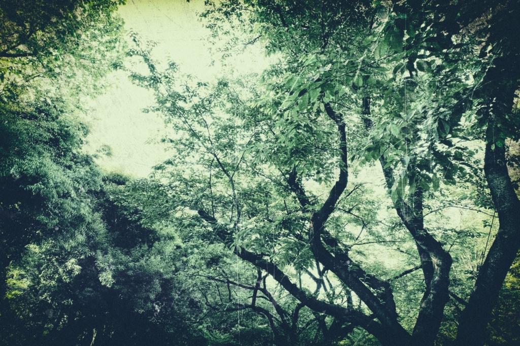 魅惑の森の画像