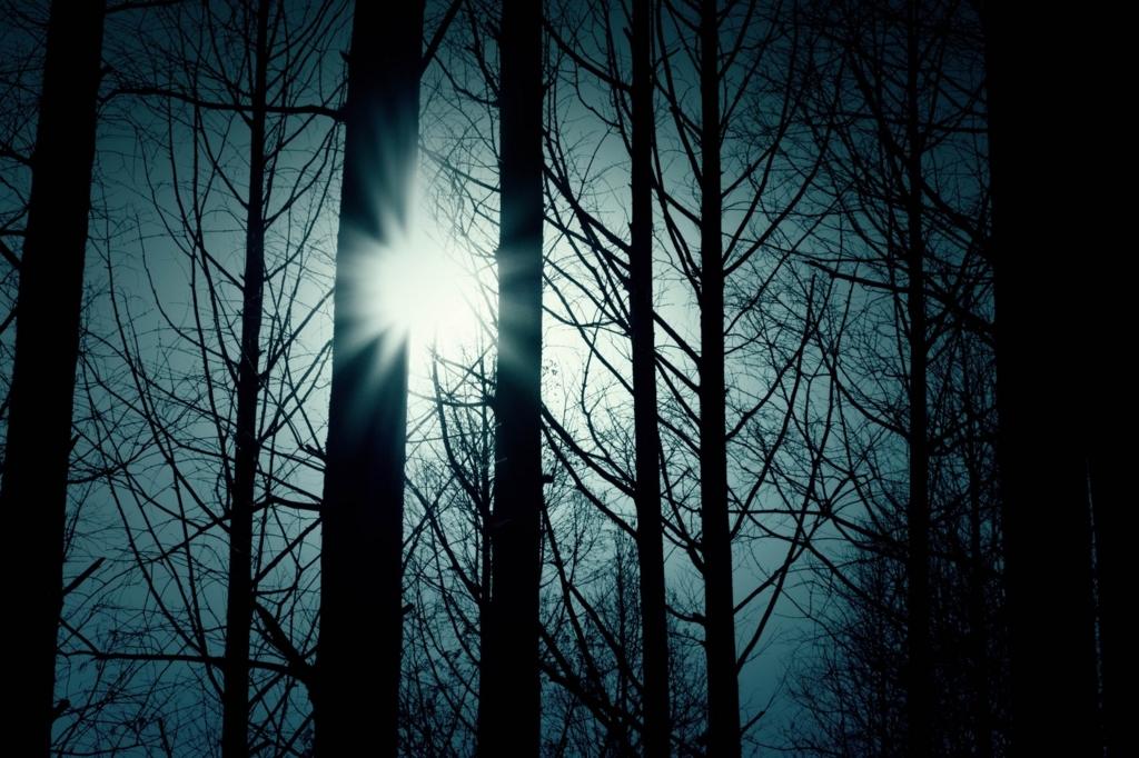 静寂な森の画像