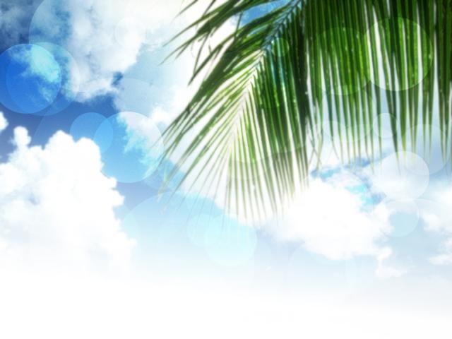 ハワイにあるヤシの木