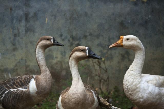 アヒルと鴨のコインロッカーの謎解き