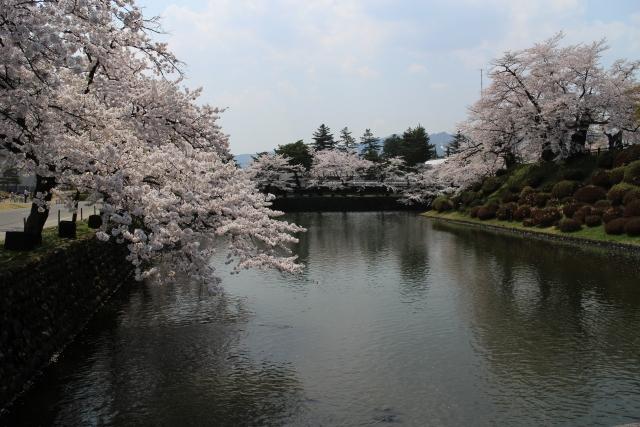 桜のように散って行った浅野内匠頭