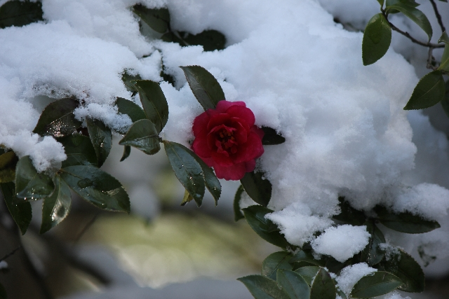 赤穂浪士達が寒い冬の時期でも耐えて来た日々