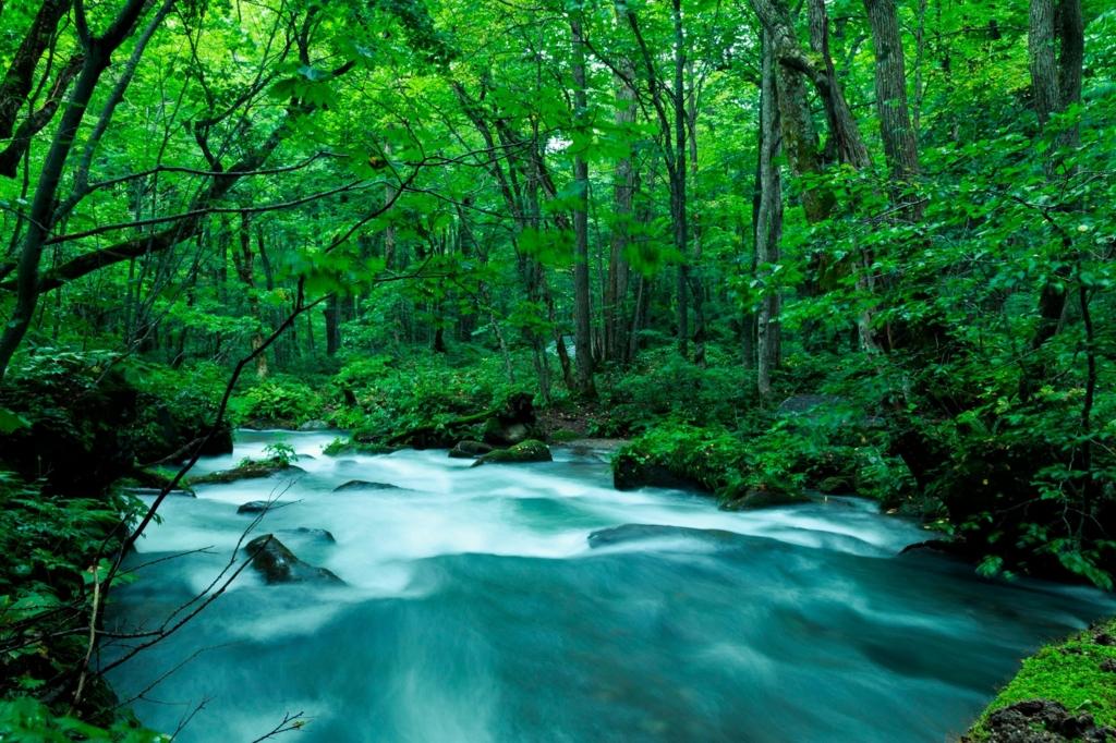 森に流れる川の画像