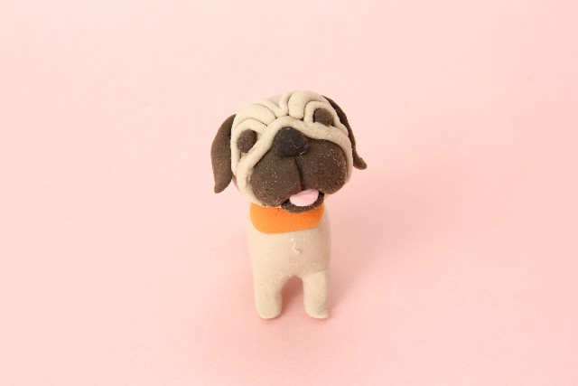 飼い主を心配する愛犬パグ