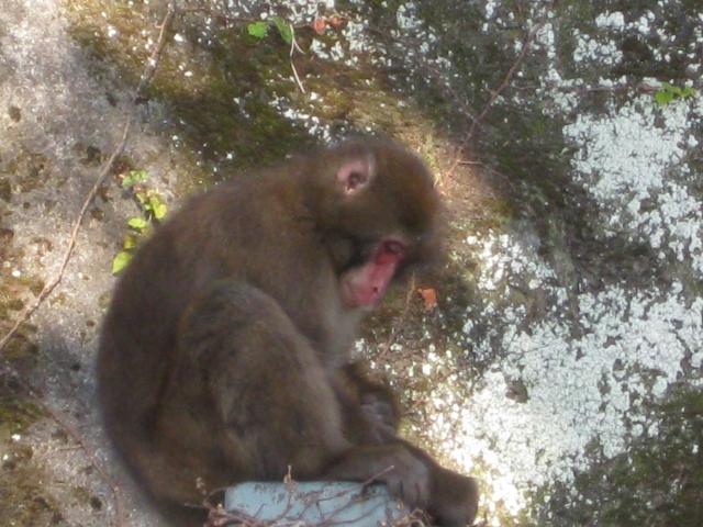 獣医に診察されるお猿さん