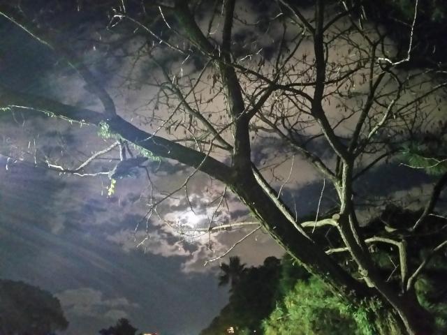 ノルウェイの森を連想させる画像