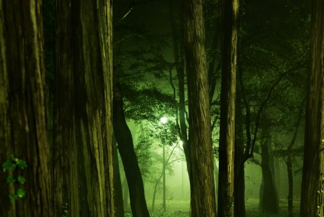 怪き森の画像