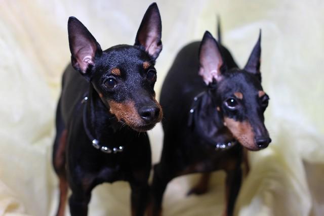 犬2匹の画像