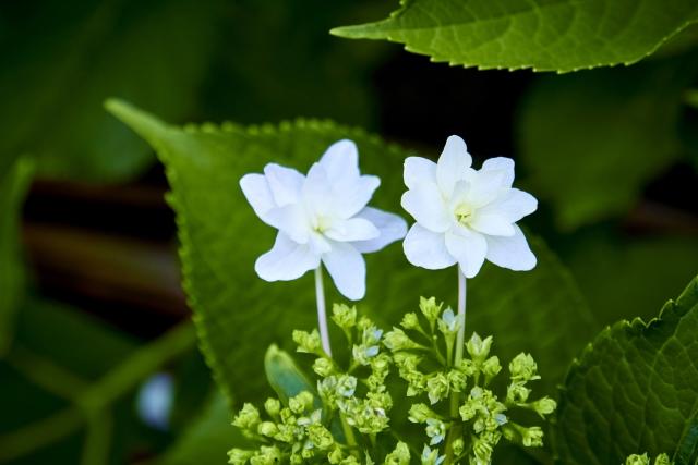 カバー曲を表す花の画像