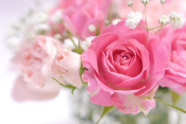 美しき薔薇の画像