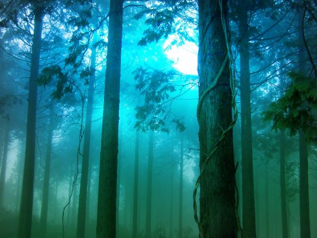 ホラー映画を表す林
