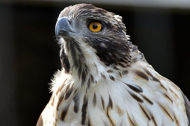 鳥の鋭い眼光