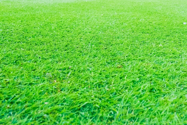 芝生へ集合するメンバー