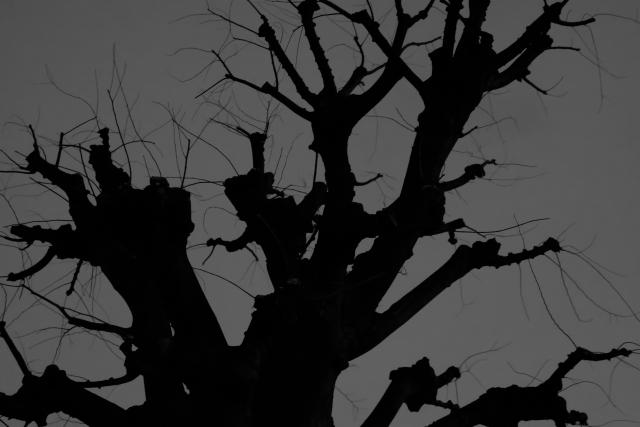 恐怖を感じさせる大木