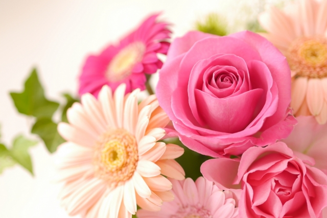 思わぬ所から登場した花