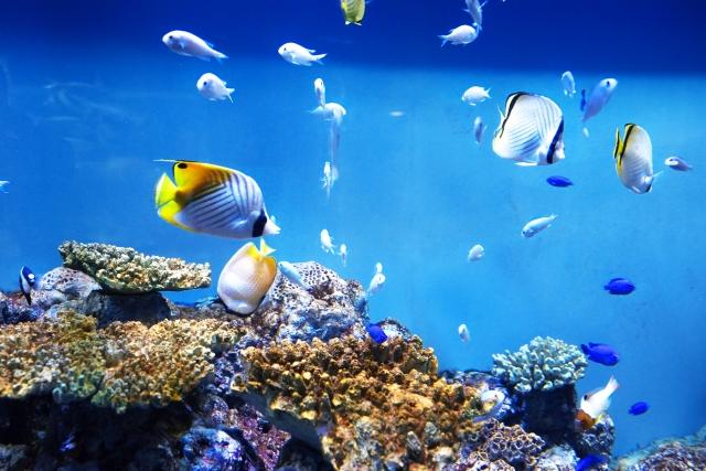 熱帯魚が泳ぐ画像