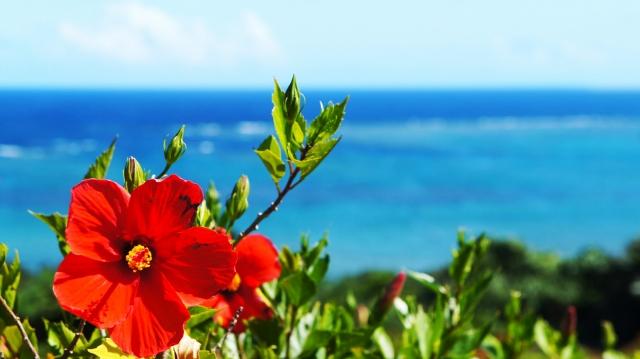 沖縄にあるハイビスカスの画像