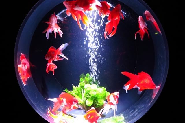 人間になる事を夢見る魚
