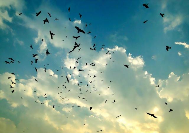 ワタリドリが羽ばたく世界