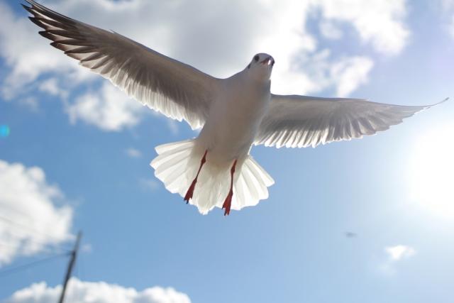 空に羽ばたける翼