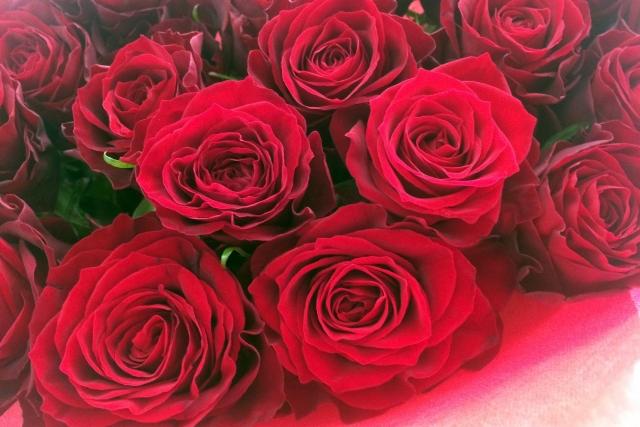 バラの美しさ