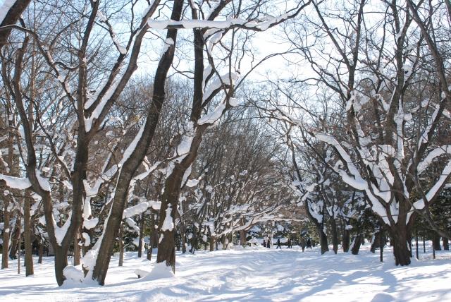 厳しい冬の森
