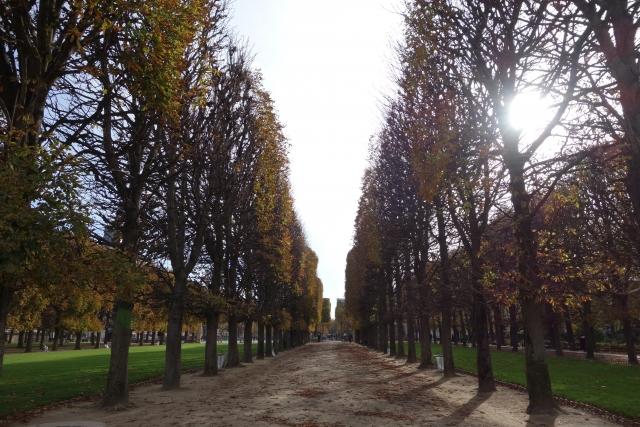 パリの並木の画像