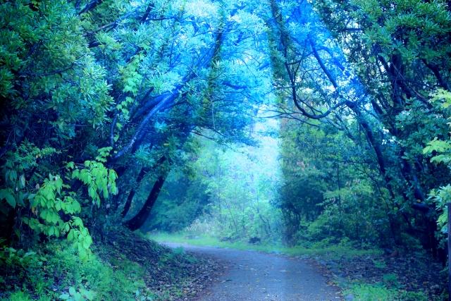 シーザーの森