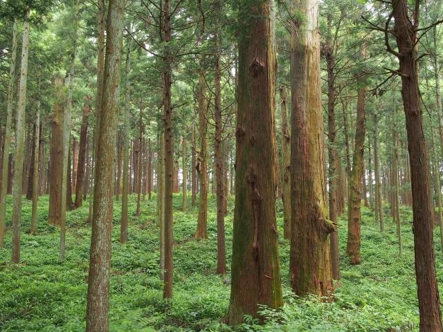 猿たちのいる森の画像