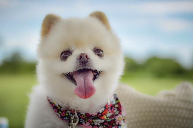 サグーワークスのマスコットに似ている犬