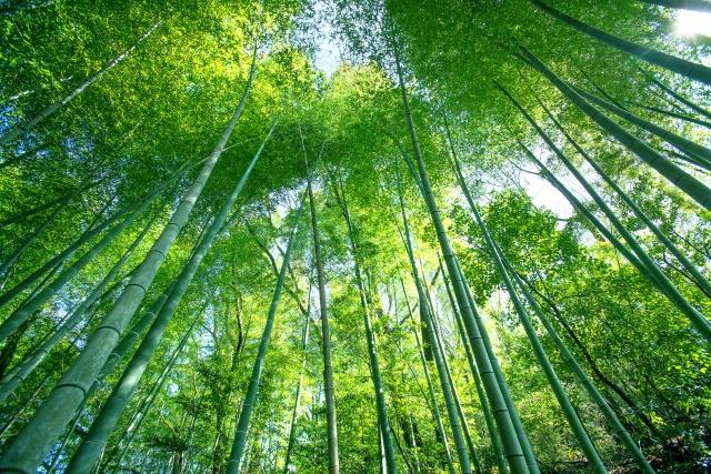 稽古をつける場所の竹林
