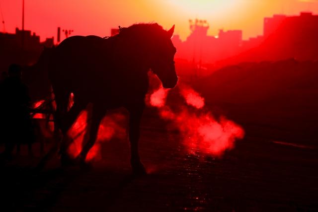 馬が錯乱する過去