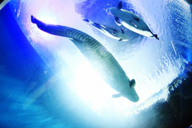 青い海に憧れる海