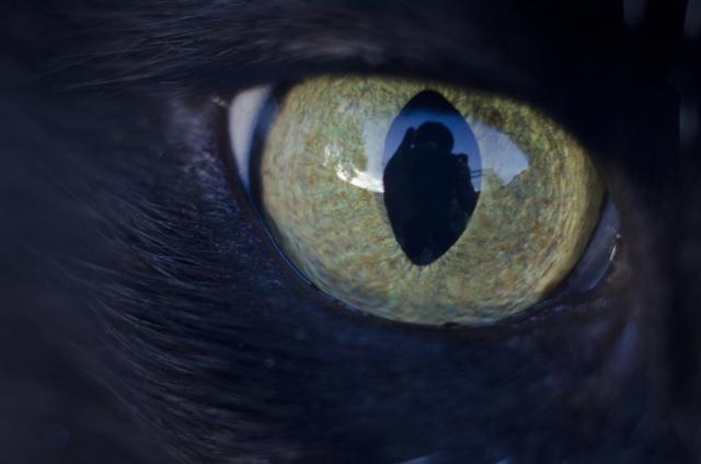 猫によるホラー