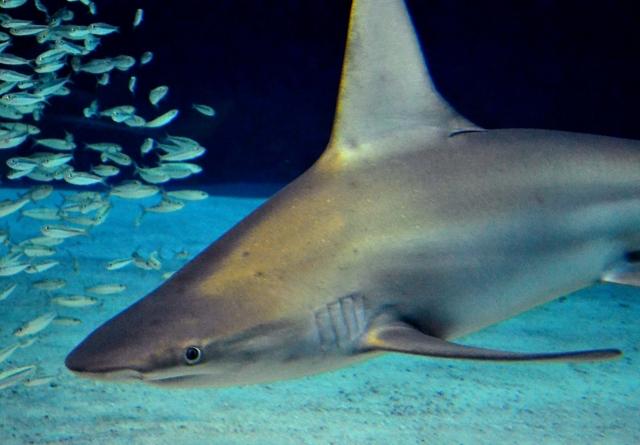 サメの恐怖