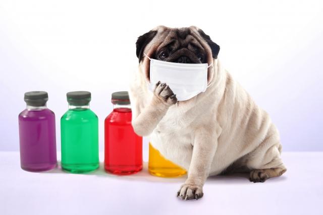 危険薬品を警戒する犬