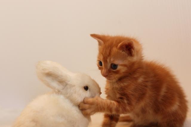 猫ビンタの画像