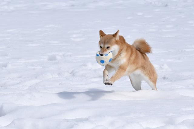 大雪に喜ぶ犬