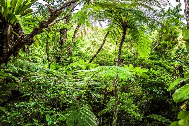ペルーのジャングル