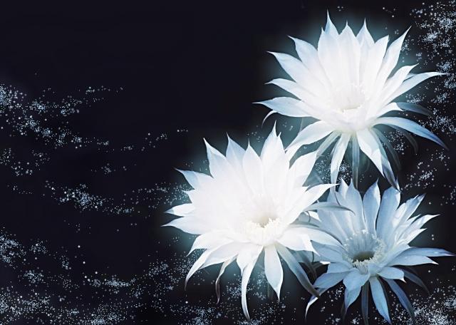 悲哀を表す花