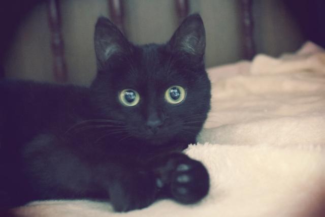魔女の猫キキ
