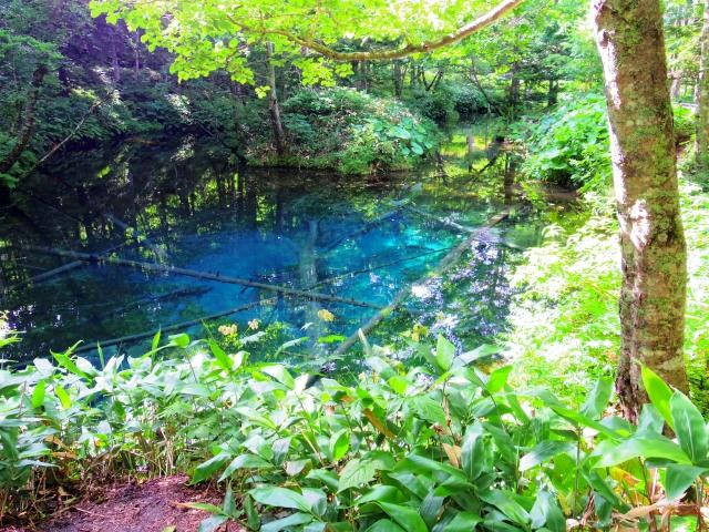シシ神の泉
