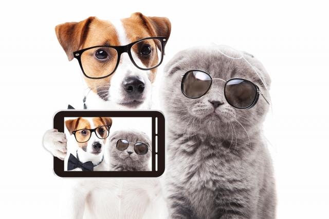 猫と犬の性格の違い