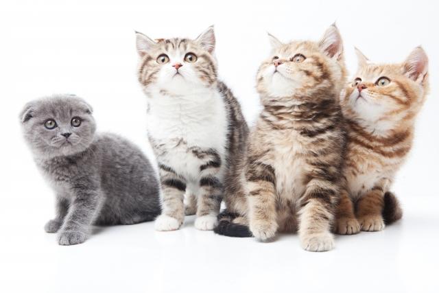 猫たちのポーズ