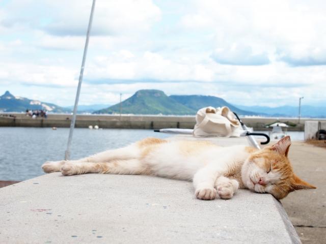 のんきな猫の画像