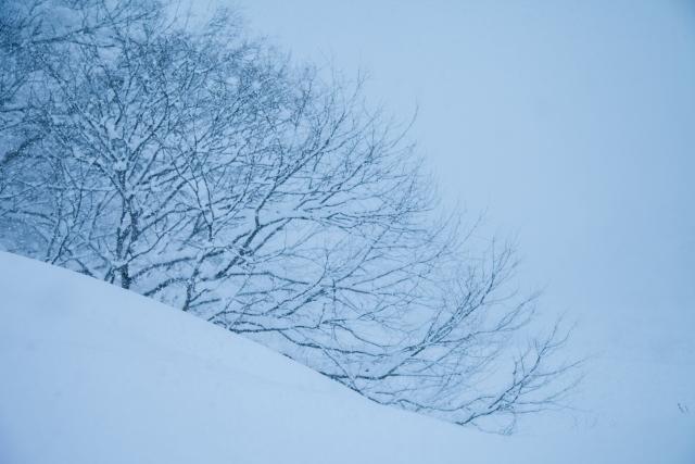 猛吹雪で国に危機