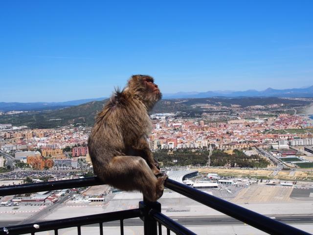 絶望する猿