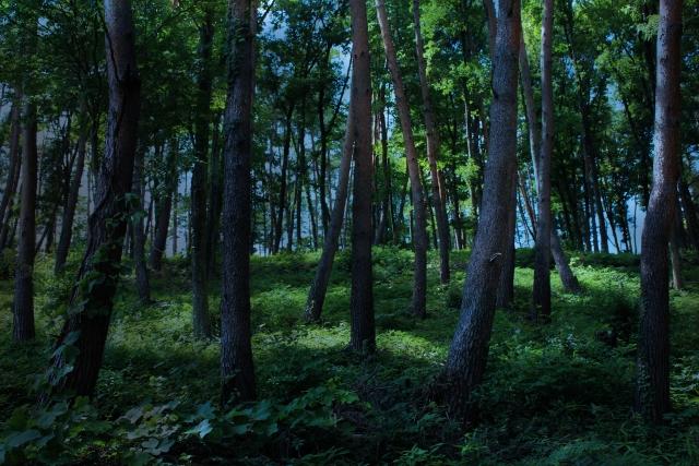 林で逃げ惑うレオとデイナ