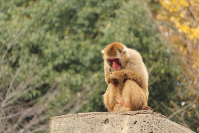 しゃがみ込む猿