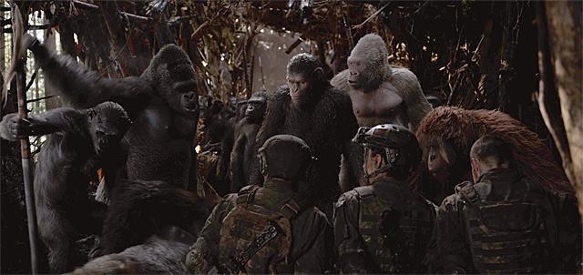 猿の大軍の画像